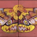 just a butterfly - 2015
